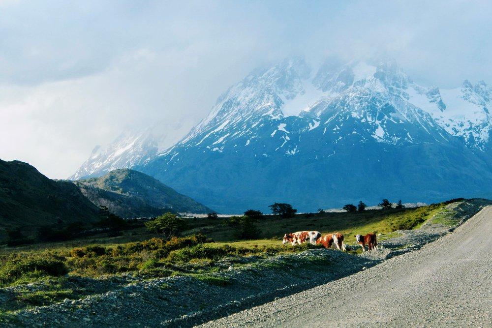 Wildlife in Torres del Paine National Park