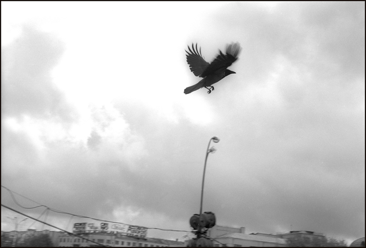 Hooded Crow, Moscow, 1992