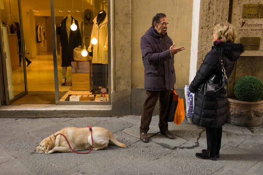Dog, Siena 2012