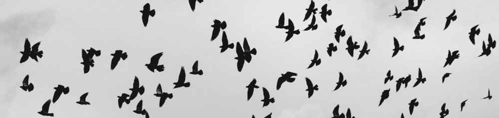 Birds 1 crop.jpg