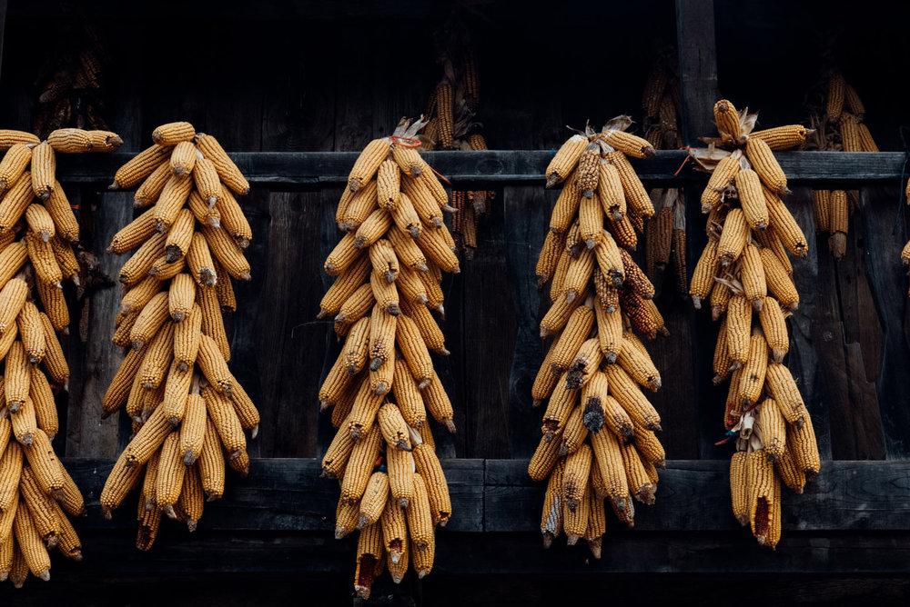 Espinareu-maíz.jpg