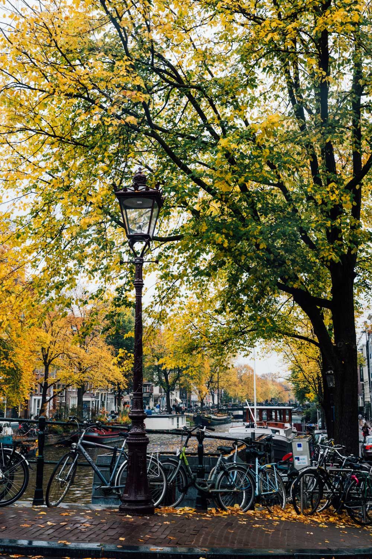 MonicaRGoya-Amsterdam4.jpg