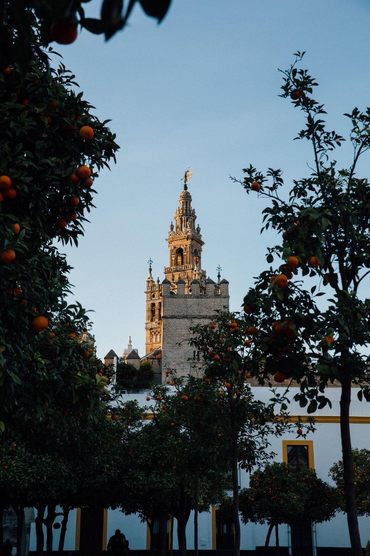 MonicaRGoya-Seville30.jpg