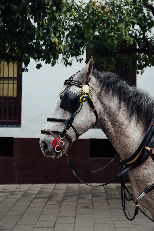 MonicaRGoya-Seville17.jpg