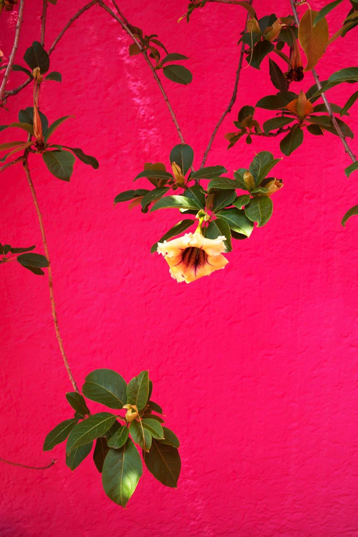 MonicaRGoya-Gardens-5.jpg