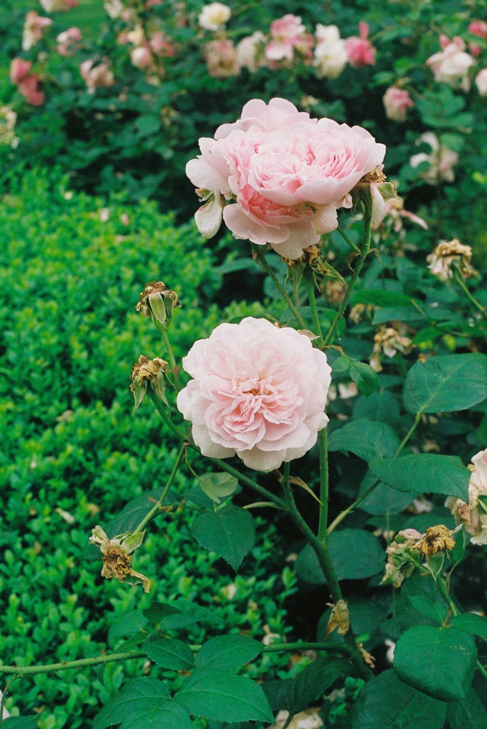 MonicaRGoya-Gardens-13.jpg