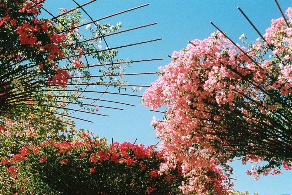 MonicaRGoya-Gardens-11.jpg