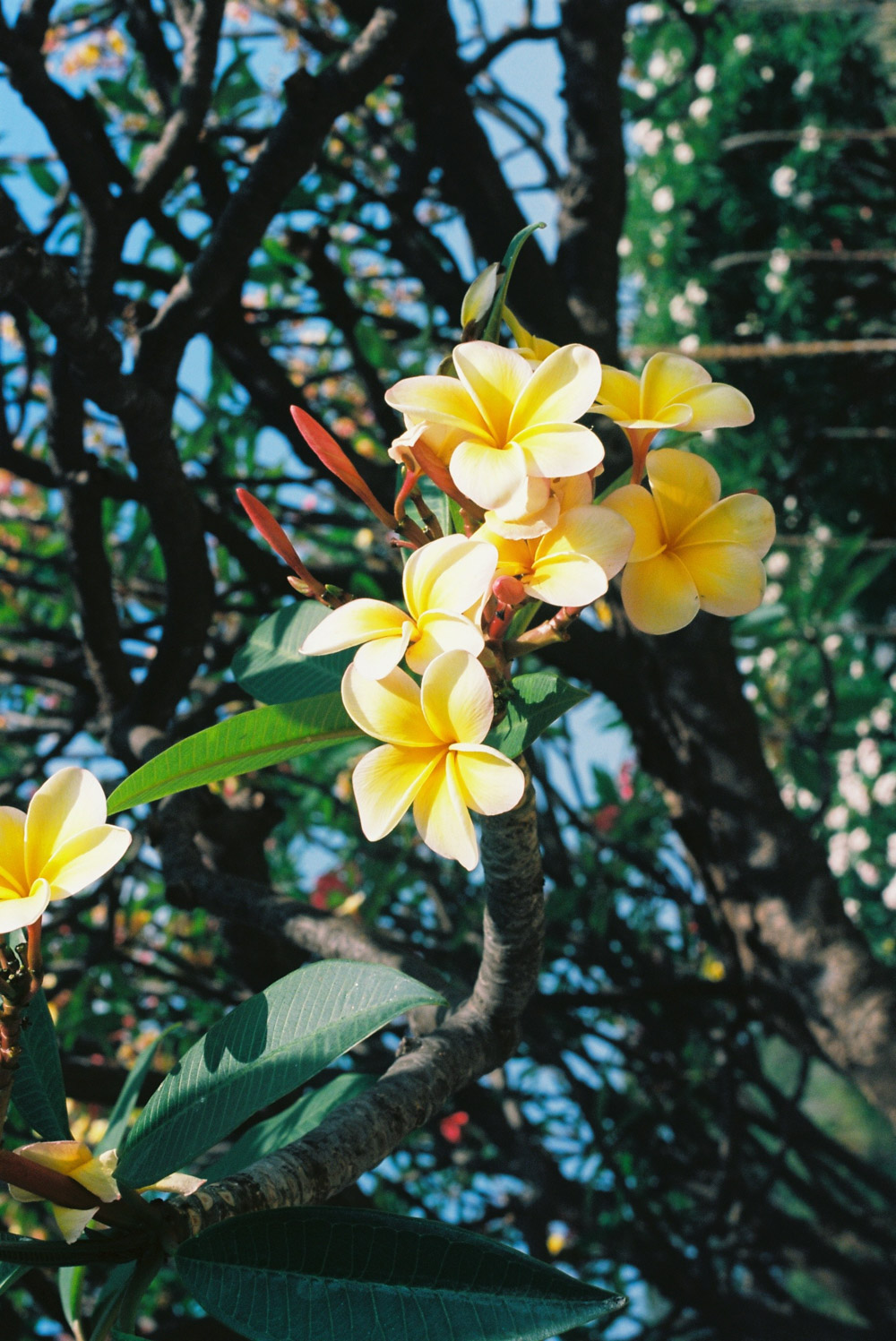 MonicaRGoya-Gardens-19.jpg