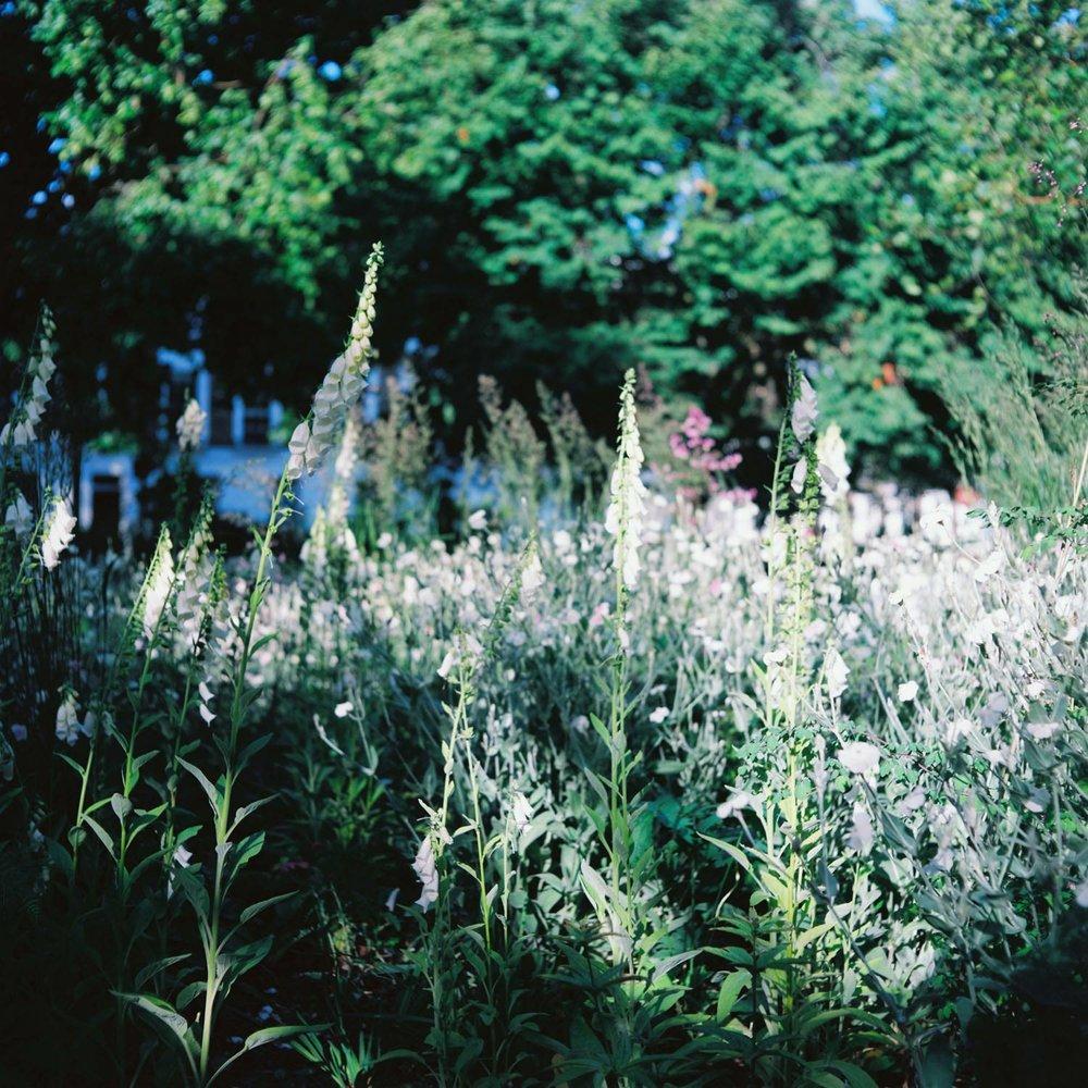 MonicaRGoya-Gardens-3.jpg
