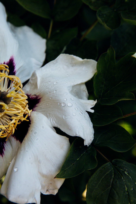 MonicaRGoya-Gardens-22.jpg
