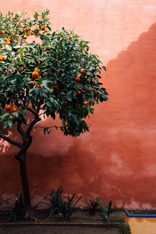 MonicaRGoya-Seville14.jpg