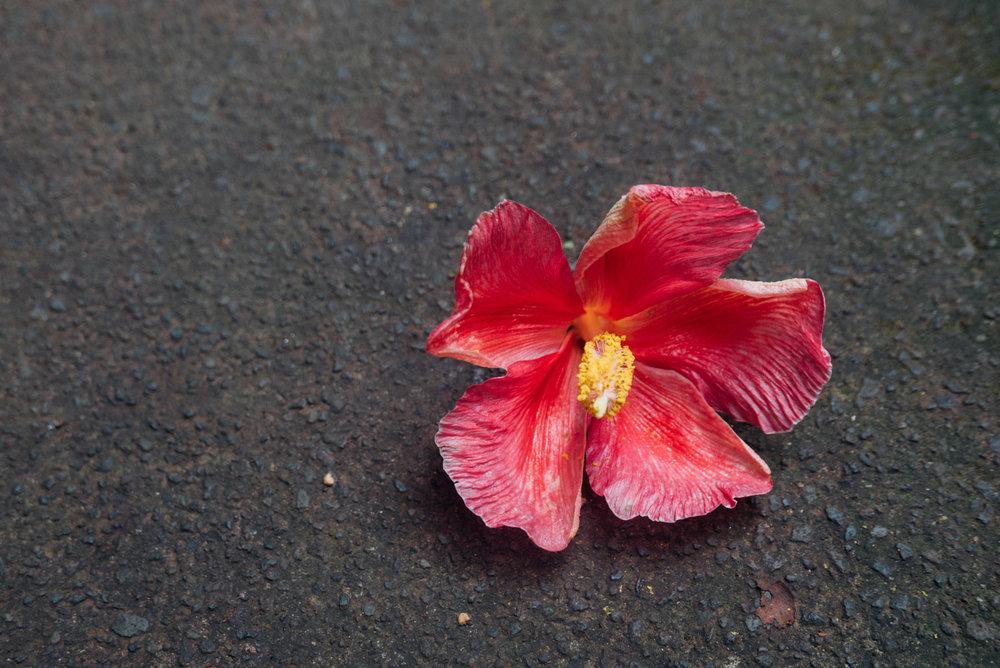 MonicaRGoya-Maui-1.jpg