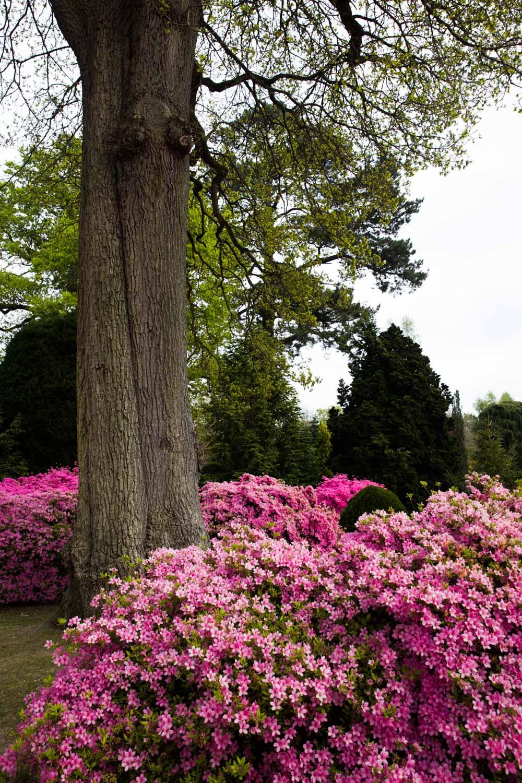 MonicaRGoya-Gardens-24.jpg