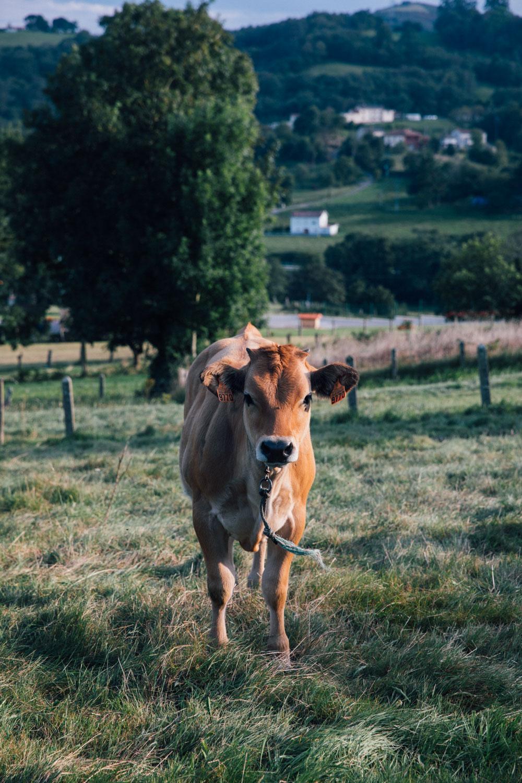 MonicaRGoya-Farming-4.jpg