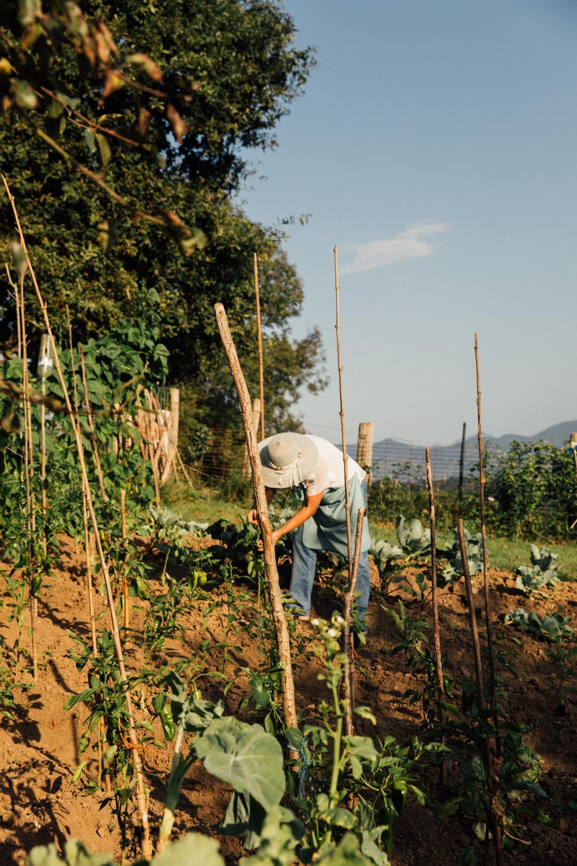 MonicaRGoya-Farming-3.jpg