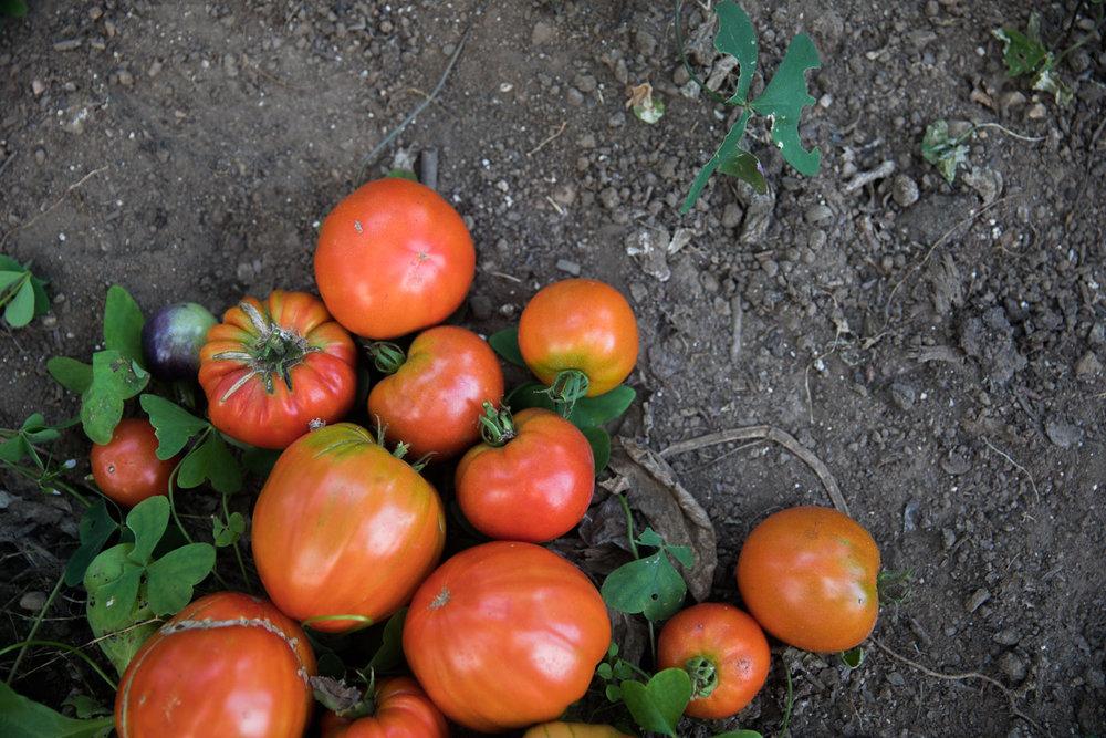 MonicaRGoya-Farming-5.jpg