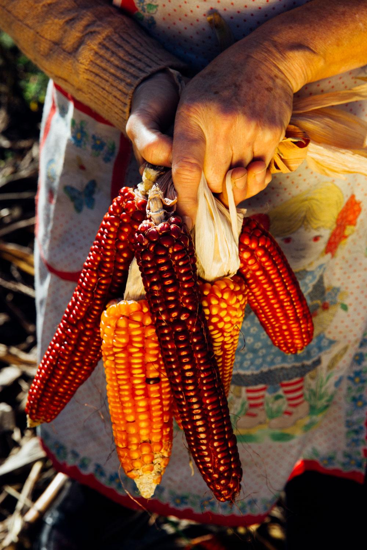 MonicaRGoya-Farming-12.jpg