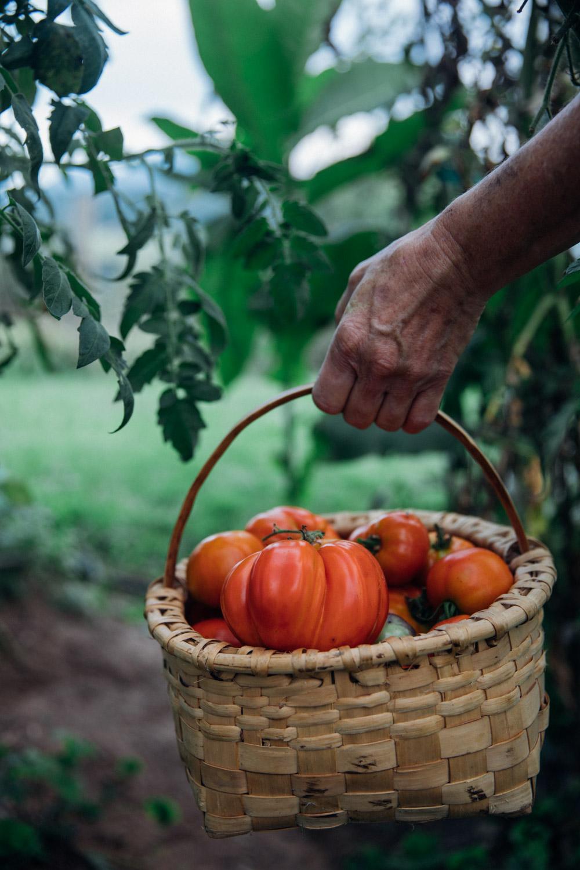 MonicaRGoya-Farming-14.jpg