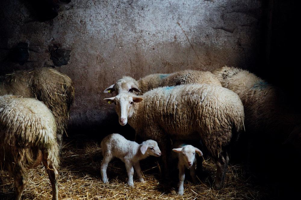 MonicaRGoya-Farming-17.jpg