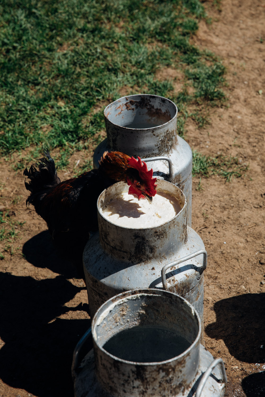 MonicaRGoya-Farming-18.jpg