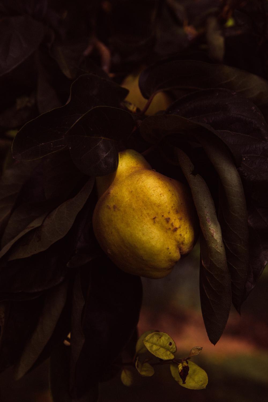 MonicaRGoya-food-farming-31.jpg
