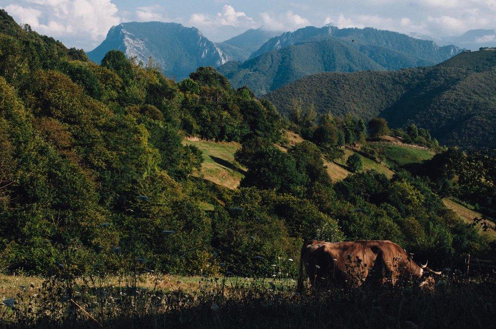 MonicaRGoya-food-farming-27.jpg