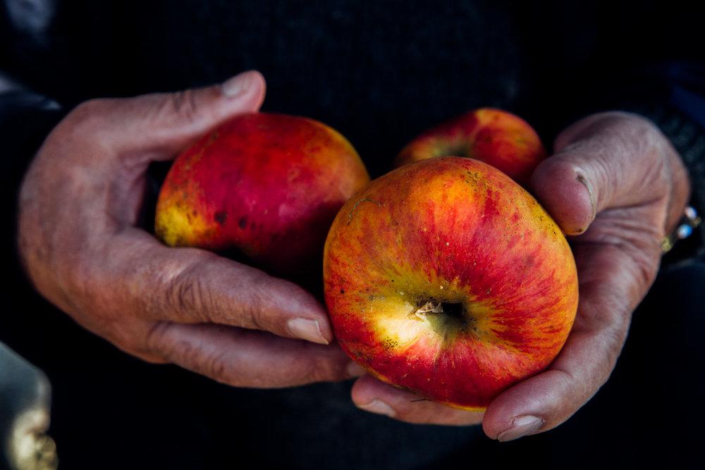 MonicaRGoya-food-farming-7.jpg