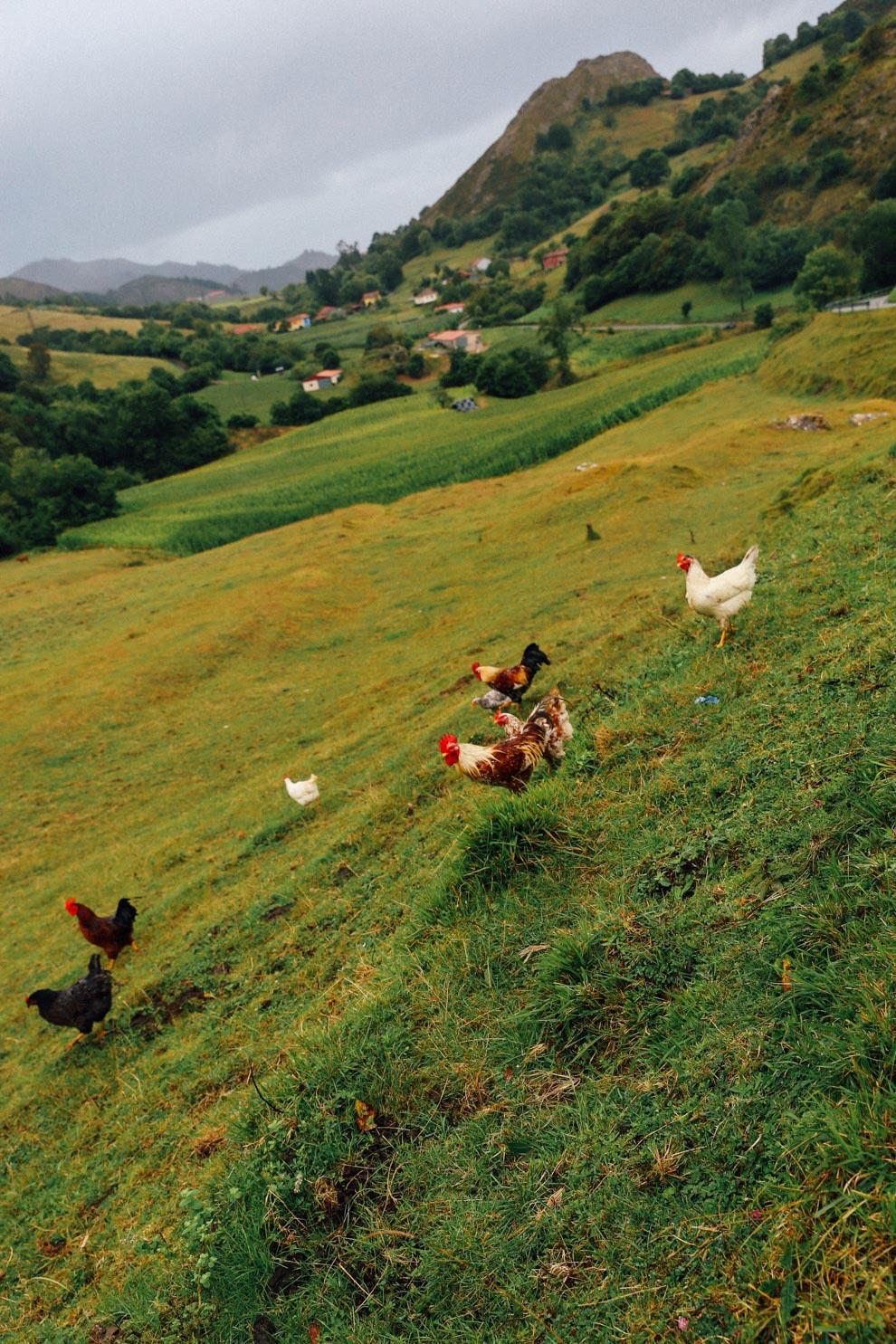 MonicaRGoya-food-farming-10.jpg