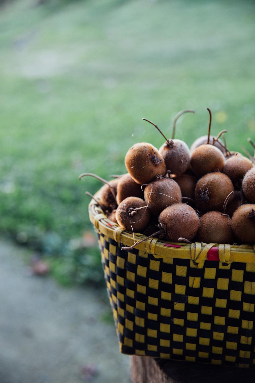 MonicaRGoya-food-farming-34.jpg