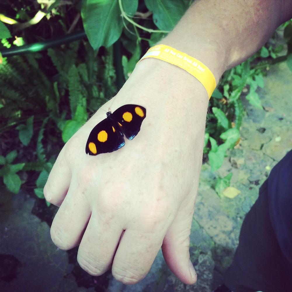 sp butterfly.jpg