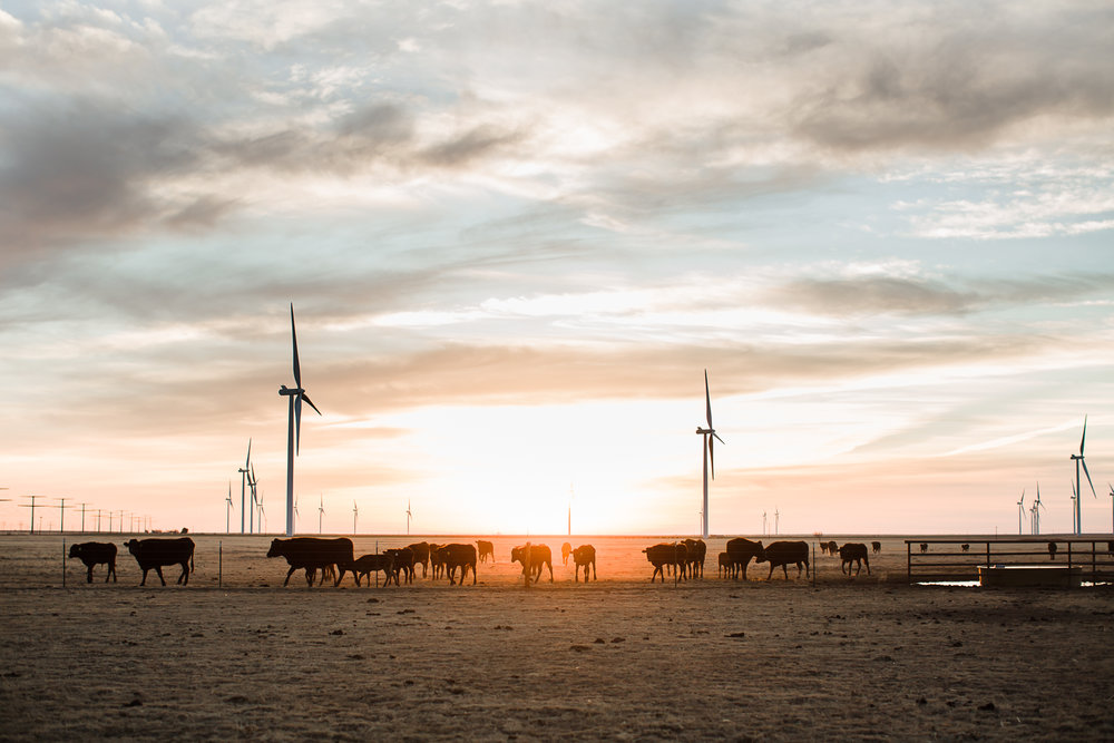 Farm-photographer-texas-1.jpg