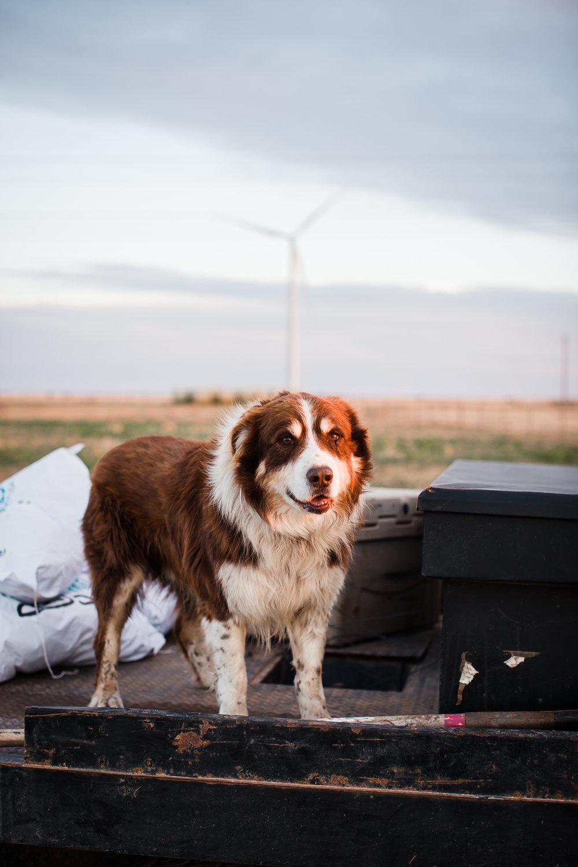 Farm-photographer-texas-3.jpg