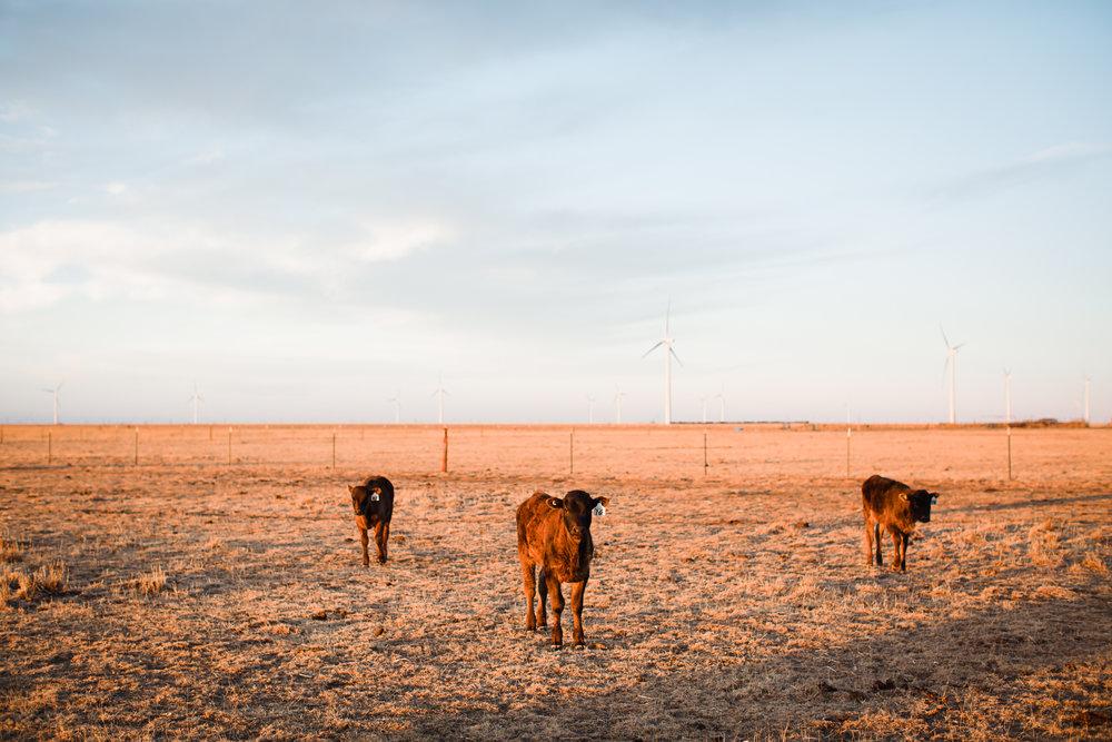 Farm-photographer-texas-5.jpg