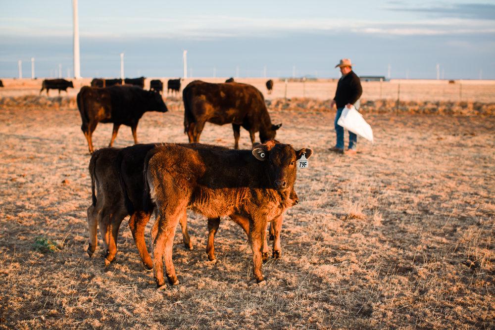 Farm-photographer-texas-6.jpg