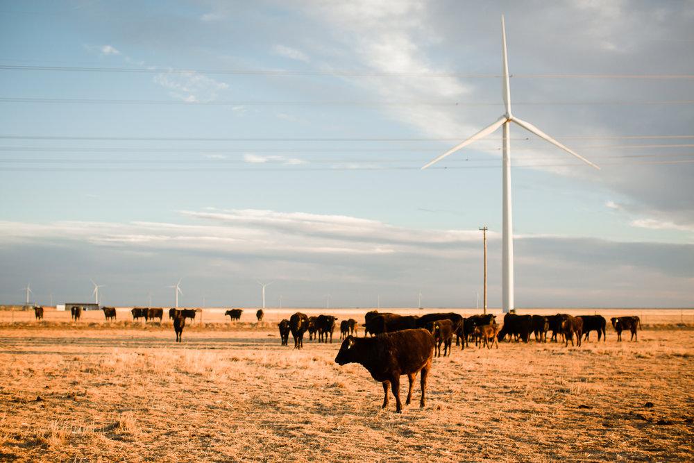Farm-photographer-texas-13.jpg