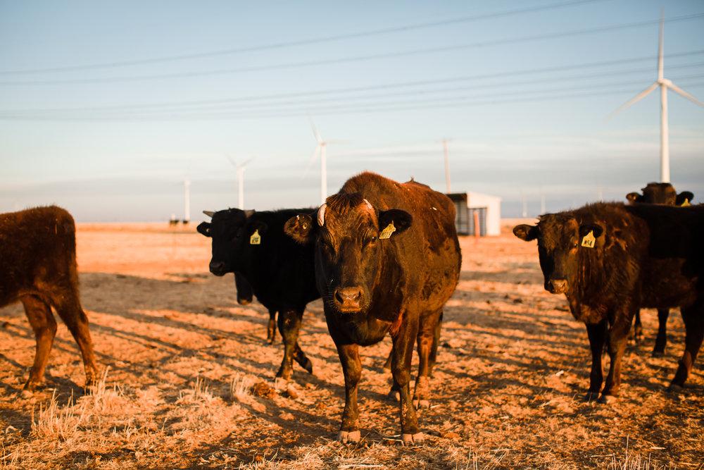 Farm-photographer-texas-14.jpg