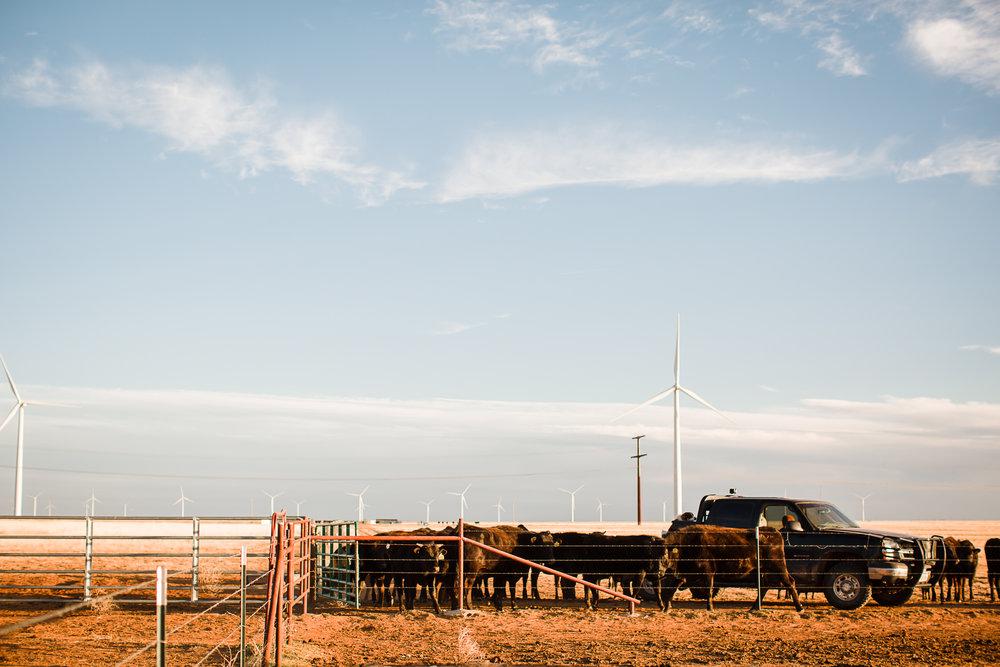 Farm-photographer-texas-18.jpg