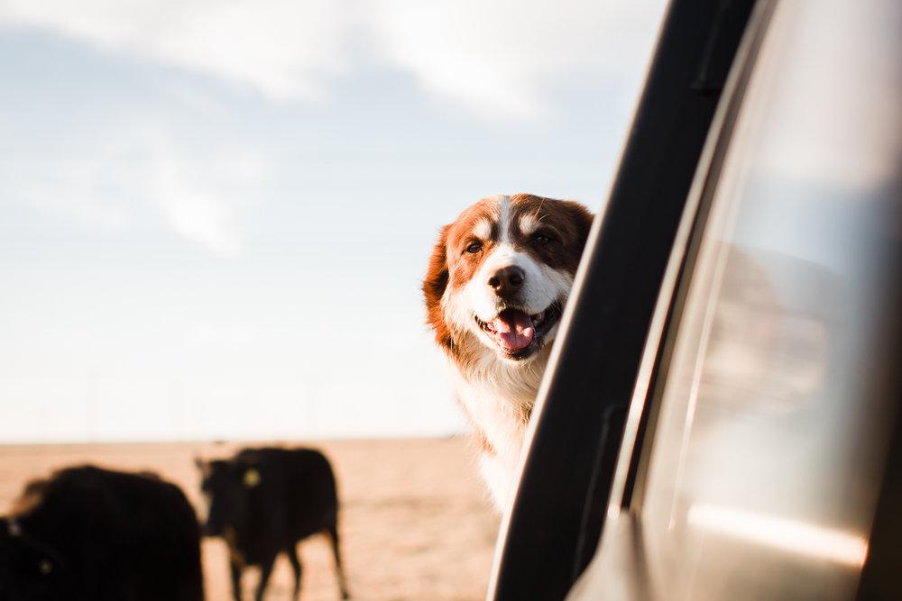 Farm-photographer-texas-19.jpg