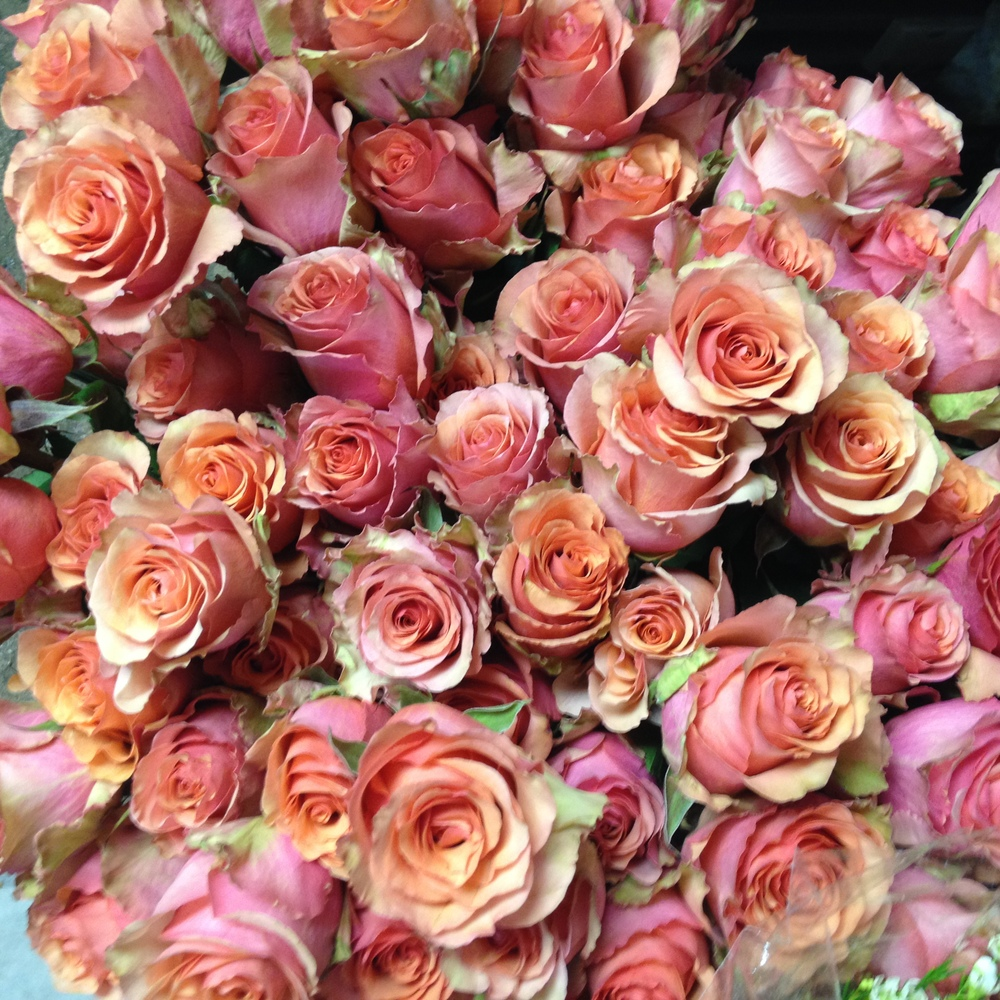 Samba Coral Full Sized Roses