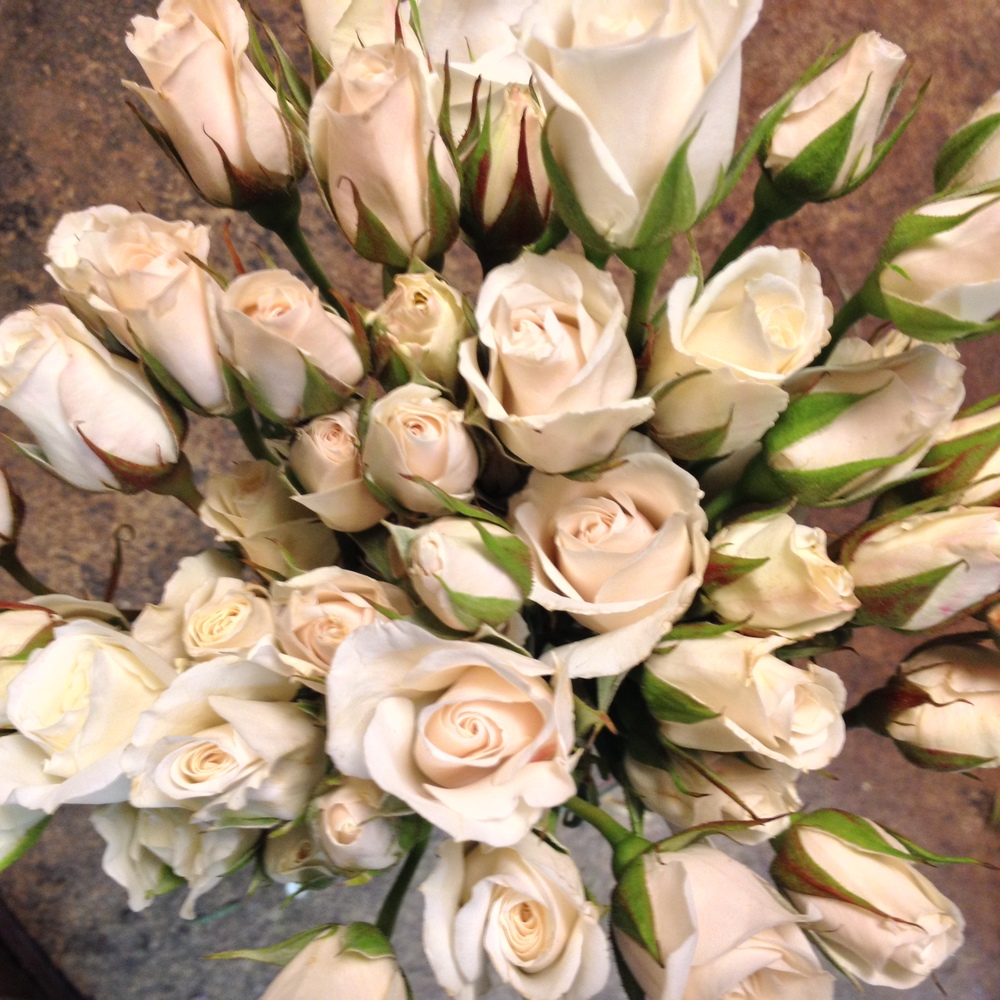 Cream mini branch Roses for corsages