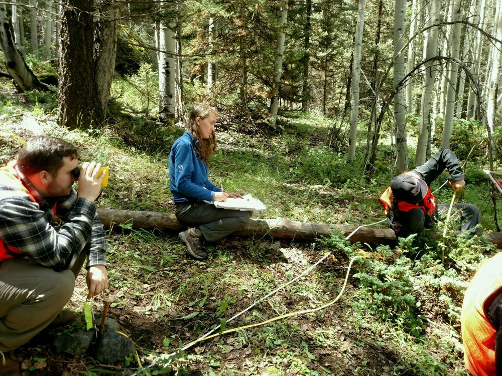 Laurel, Duncan and Lauren measure the forest above Telluride Valley Floor.