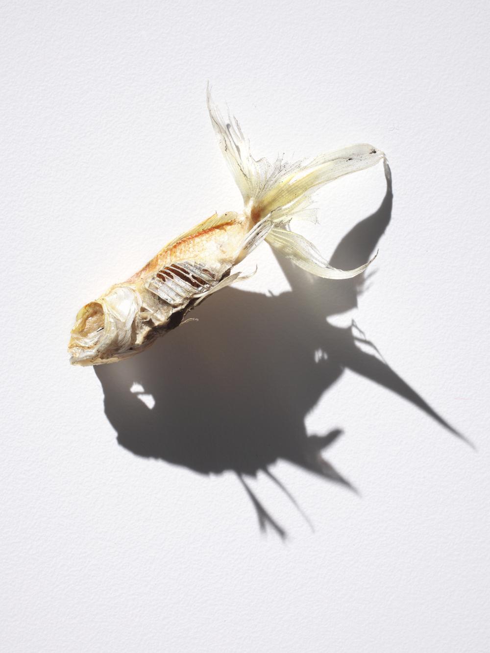 IMG_0033-fish.jpg