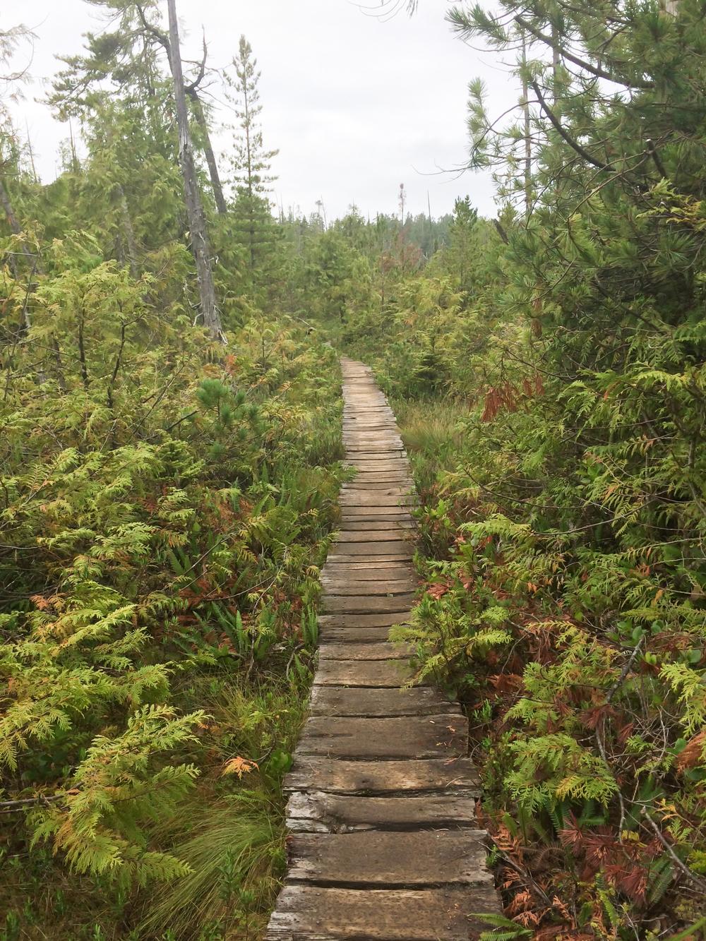 West Coast Trail (11 of 30).jpg