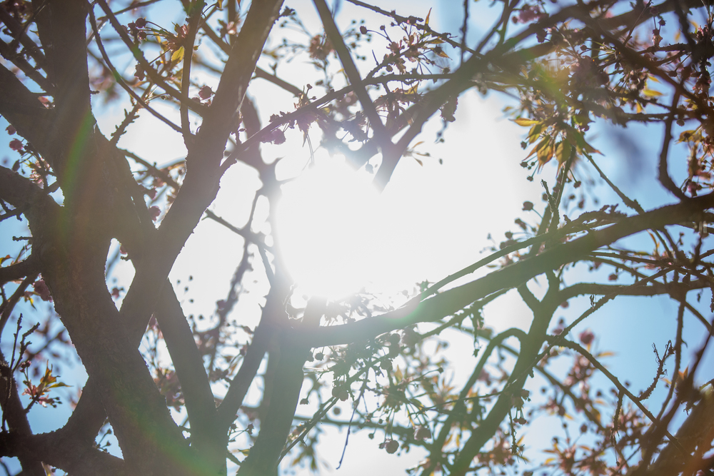 Sunny Day (9 of 10).jpg