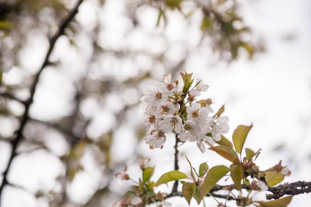 Flowers (2 of 11).jpg