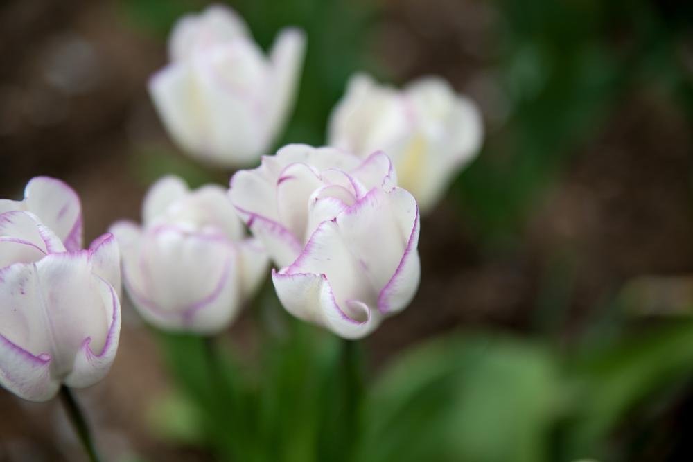 Flowers (5 of 11).jpg