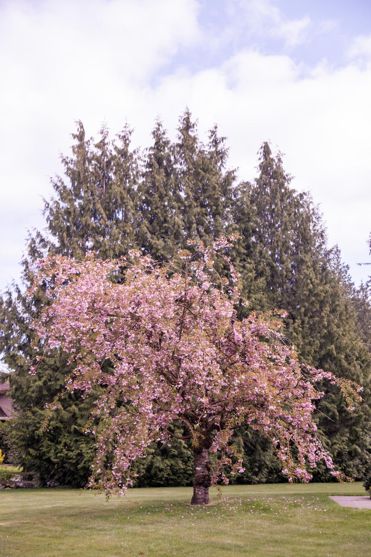 Flowers (10 of 11).jpg