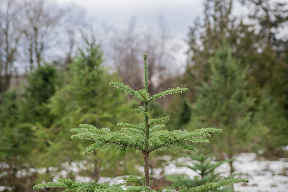 Christmas Tree Extravaganza 2016 (35 of 55).jpg