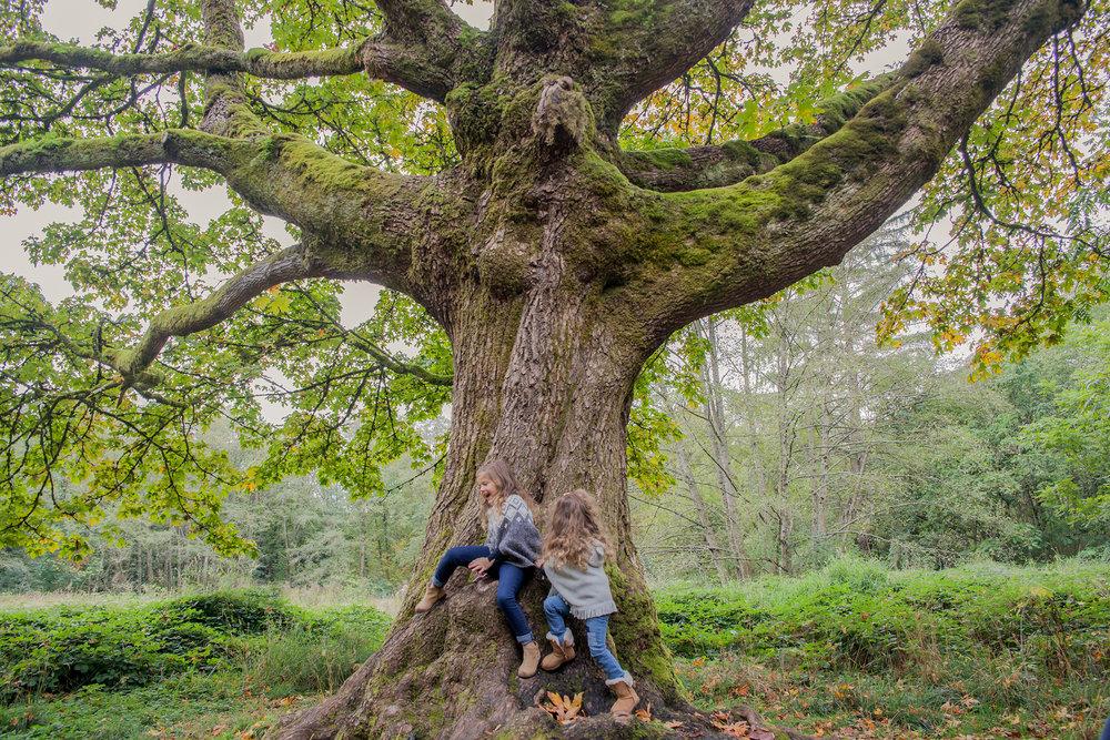 Redwood Park - October 2017 - WT (69 of 168).jpg