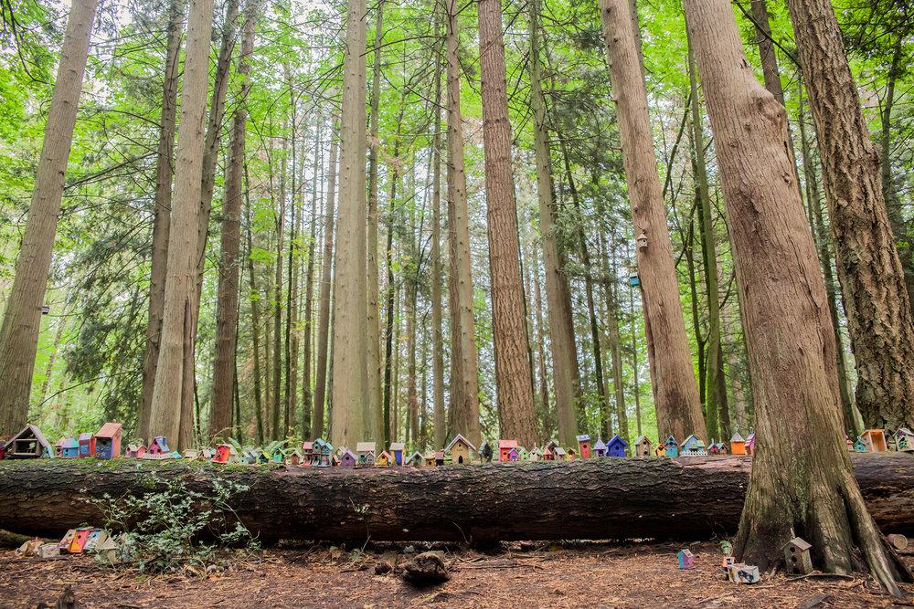 Redwood Park - October 2017 - WT (132 of 168).jpg
